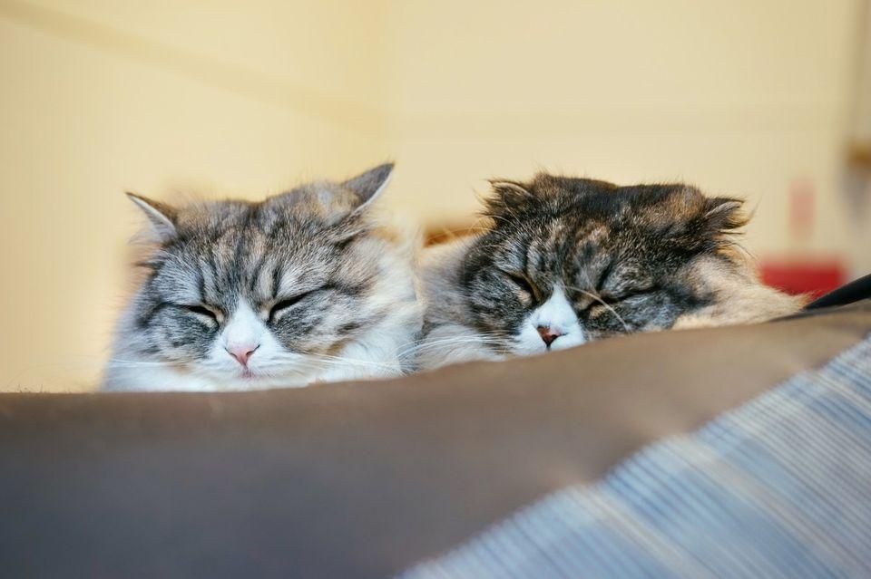 生理前の不眠を解消する方法